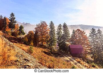 neblig, transylvania, morgen
