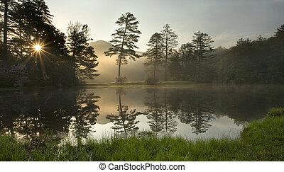 nebuloso, amanhecer, em, floresta