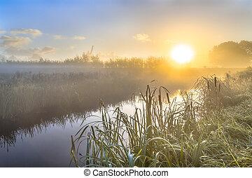 nebuloso, amanhecer, sobre, rio, em, holandês, countriside