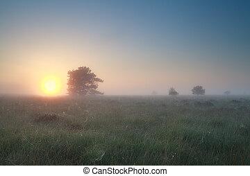 nebuloso, amanhecer, sobre, verão, pântano