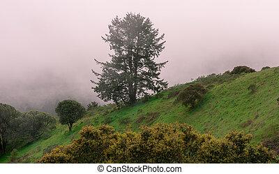 nebuloso, califórnia, paisagem, norte
