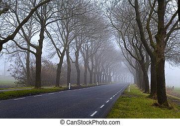 nebuloso, estrada asfalto