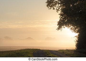 nebuloso, floresta, amanhecer, caminho