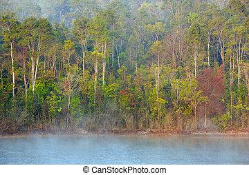 nebuloso, floresta