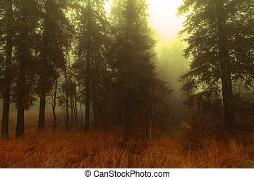 nebuloso, floresta, clareira