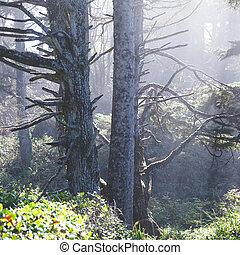 nebuloso, floresta, luz