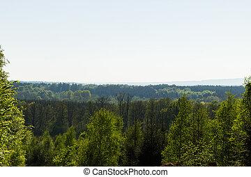 nebuloso, floresta, vista
