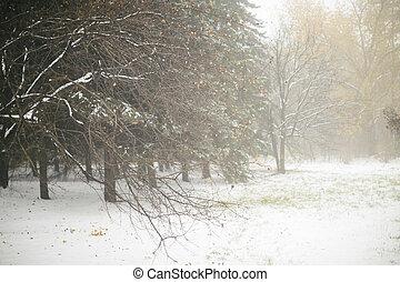 nebuloso, inverno, floresta