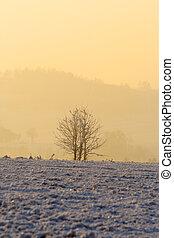 nebuloso, inverno, manhã