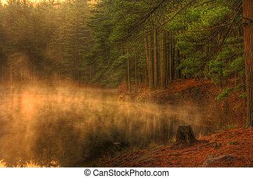 nebuloso, manhã, floresta lago