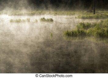 nebuloso, manhã, lago