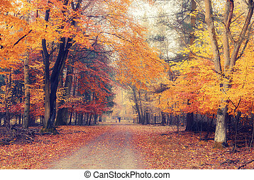 nebuloso, outono, parque