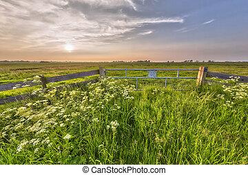 nebuloso, pôr do sol, sobre, cerca, em, holandês, polder