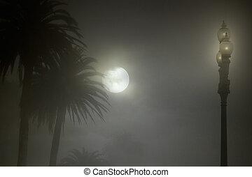 nebuloso, parque, noturna