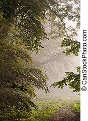 nebuloso, parque, paisagem, manhã