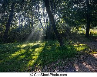 nebuloso, raios, floresta, sol