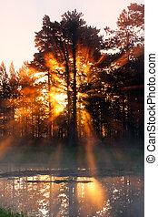 nebuloso, raios sol, floresta, atrás de, manhã
