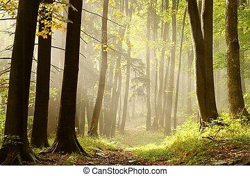 nebuloso, rastro, em, um, encantado, floresta