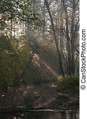 nebuloso, rio, floresta, outonal, manhã