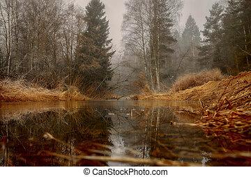nebuloso, rio, floresta, paisagem, manhã
