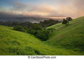 nebuloso, sobre, pôr do sol, prado, califórnia