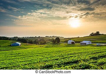 nebuloso, verão, pôr do sol, sobre, fazenda, campos, em, rural, york, município, pennsylvania.