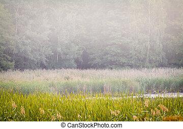 nebuloso, wetlands, e, floresta, parede, paisagem.