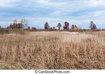 Necedah Prairie and Savanna Environs