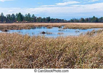 Necedah Sedge Meadow Wetlands and Forest