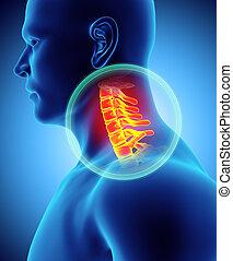 Neck painful - cervica spine skeleton x-ray, 3D illustration.