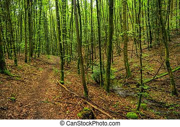 neckarsteig, trilha hiking, alemanha, floresta, ao longo, paisagem, interurbano
