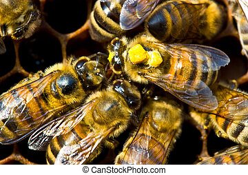 The bees are taken to the cells nectar and pollen. The yellow color of the insect back shows that they take it with sunflowers.
