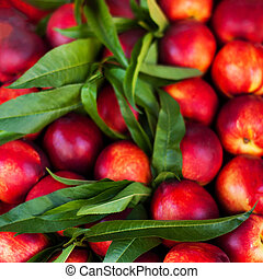 Nectarine Background - Fresh organic Cherry fruits. Frame...