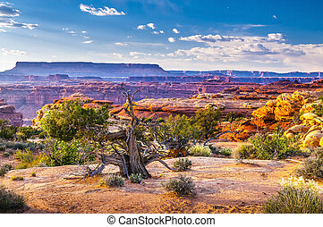 Needles District landscape