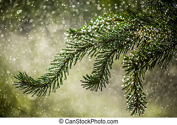 Needles of pine branches on the background of splashing water