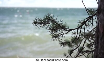 Needles of pine trees over water in rack focus in slow...