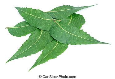 neem, 薬効がある, 葉
