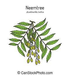 Neem (Azadirachta indica), or Indian lilac, medicinal plant...