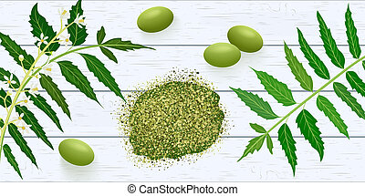 Neem leaf branch, flowers and pods on white wooden shabby...