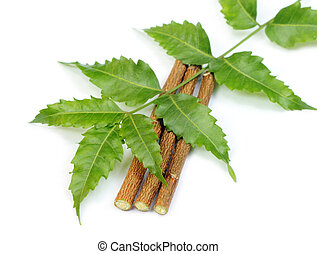 Neem leaves and twigs over white background