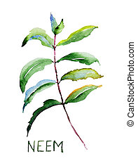 Neem leaves, watercolor illustration