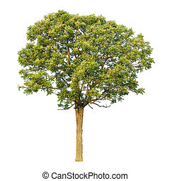 Wood originated in India, Grow in the dry, Useful, both as food and building homes.
