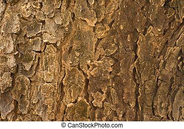 Neem Tree (Azadirachta Indica) bark texture close up
