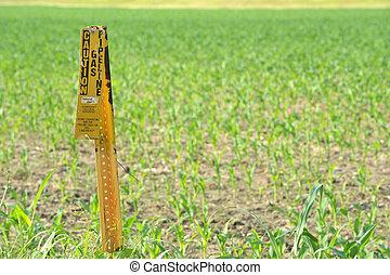 A neglected, worn gas pipeline sign warns of hidden danger lying below a farmer's cornfield