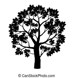 negro, arce, árbol., vector, illustration.