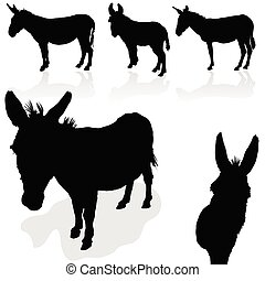 negro, burro, silueta