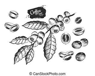 negro, café blanco, frijoles, conjunto, ilustración