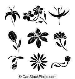 negro, Conjunto, diseño, flor, elementos