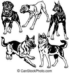 negro, conjunto, perros, blanco
