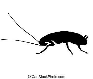 negro, cucaracha